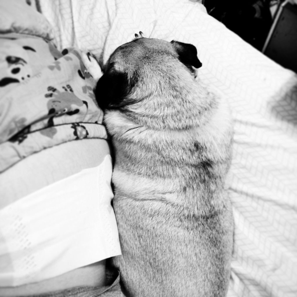 Pug Heating Pad