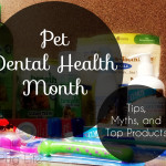 Pet Dental Health – Debunking Myths