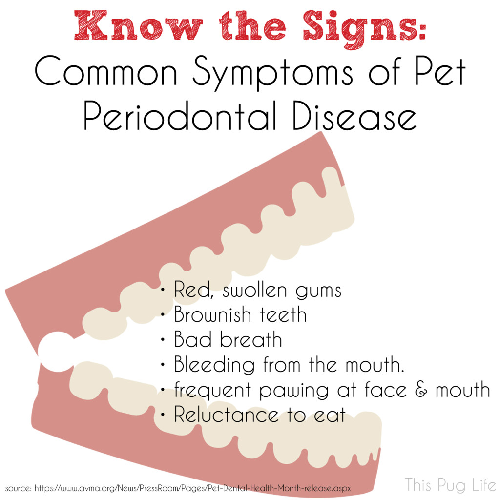 Signs of Pet Dental Disease Infographic