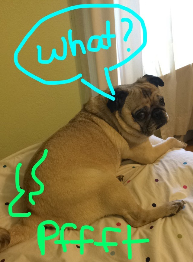 Pug Farts