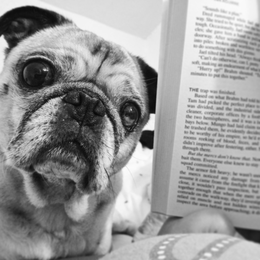 Book Pug
