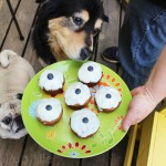 Molly Turns 12 with Pupcakes