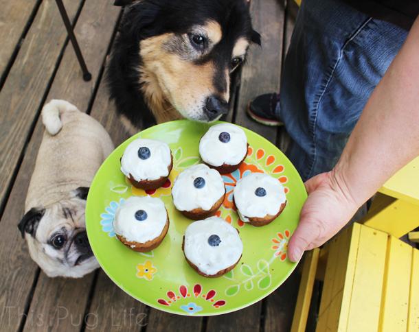 Pupcakes Dog Cupcakes