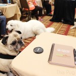 BlogPaws Nashville – My First Blogging Conference Experience