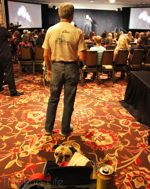 Pug at BlogPaws Keynote