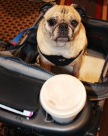 BlogPaws Nashville Part-2