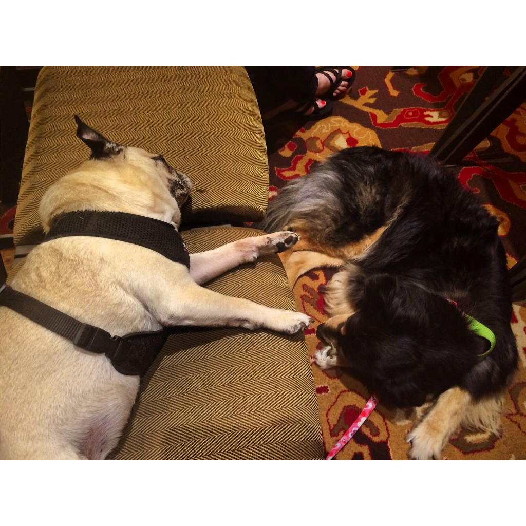 Pug and Molly BlogPaws Session