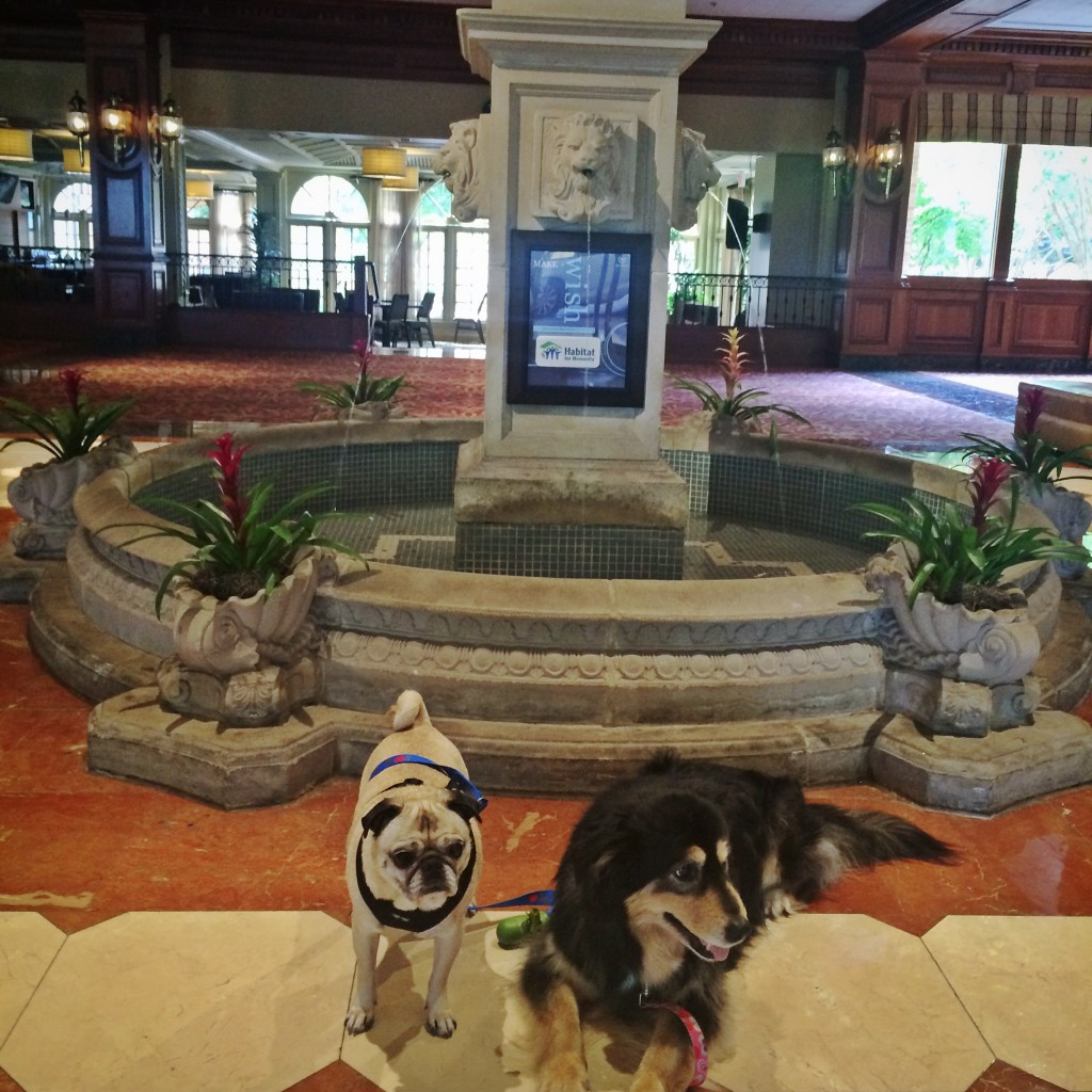 Pug and Molly Sheraton Music City