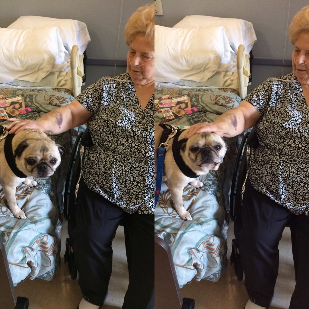 Pug Visiting Grandma
