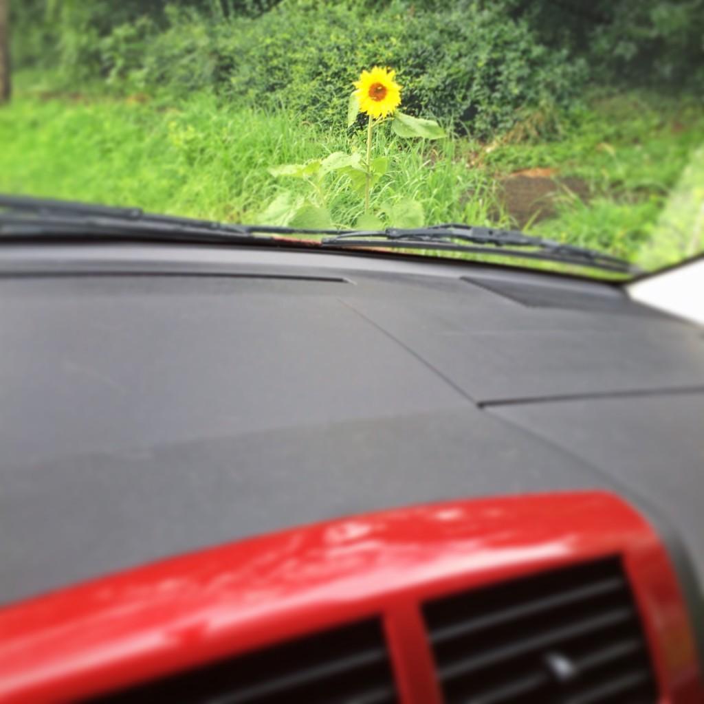 Random Sunflower