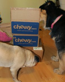 Dogs inspect packages