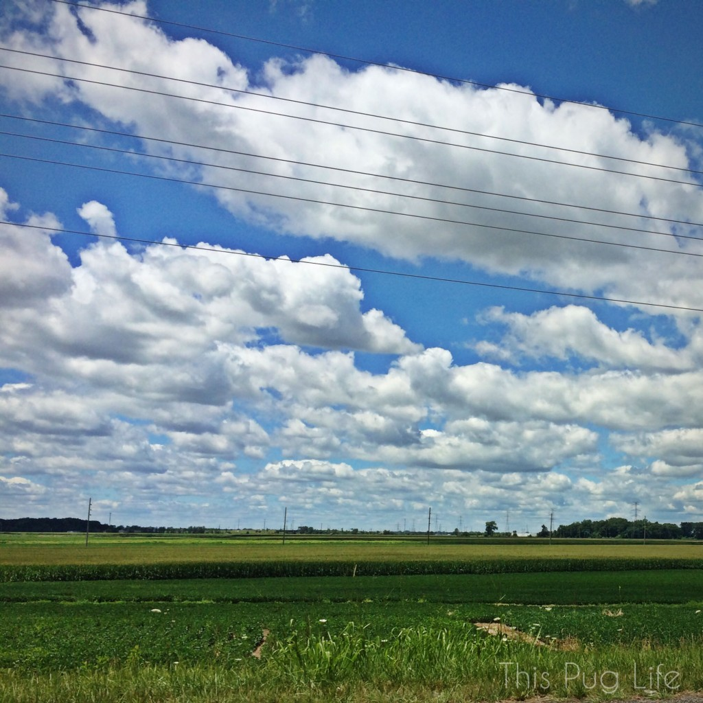 Midwest Sky and Corn Field