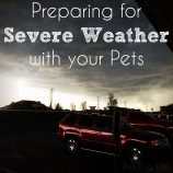 Preparing for Severe Weather with your Pets