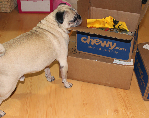 Pug Inspecting Package