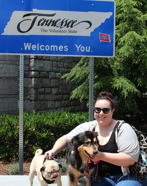 Welcome To Tennessee Pug