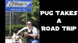 Road Tripping with Pug & Molly