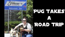 Pug Takes a Road Trip