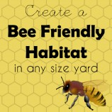 Create a Bee Friendly Habitat in Any Yard