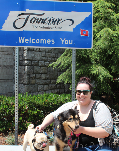 Road Trip Tennesee with Pug