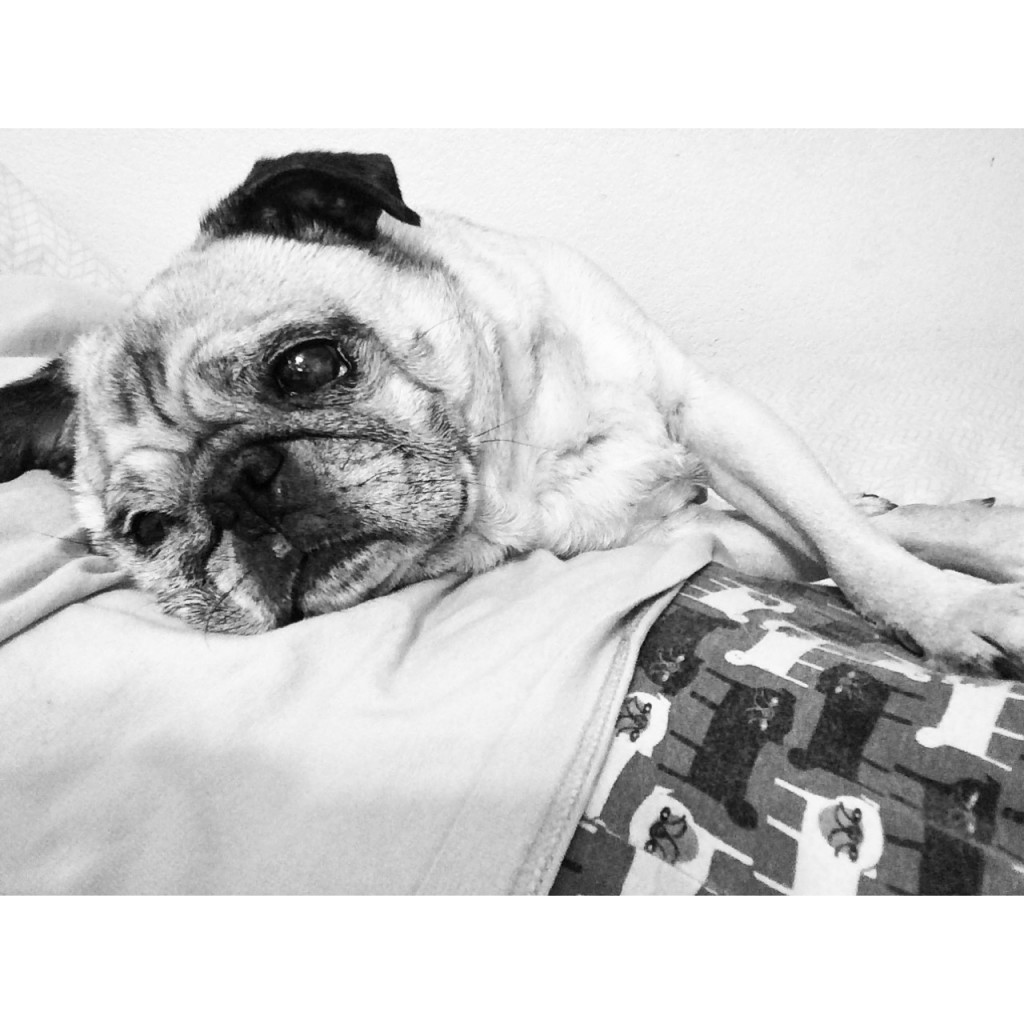 Pug Cuddles Pug Pajamas