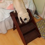 Pug Reviews: Solvit Pet Steps + Giveaway! {Closed}