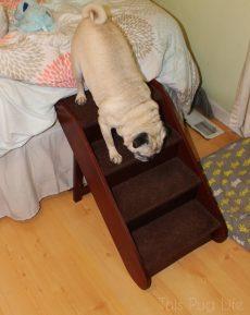 Pug Pet Steps