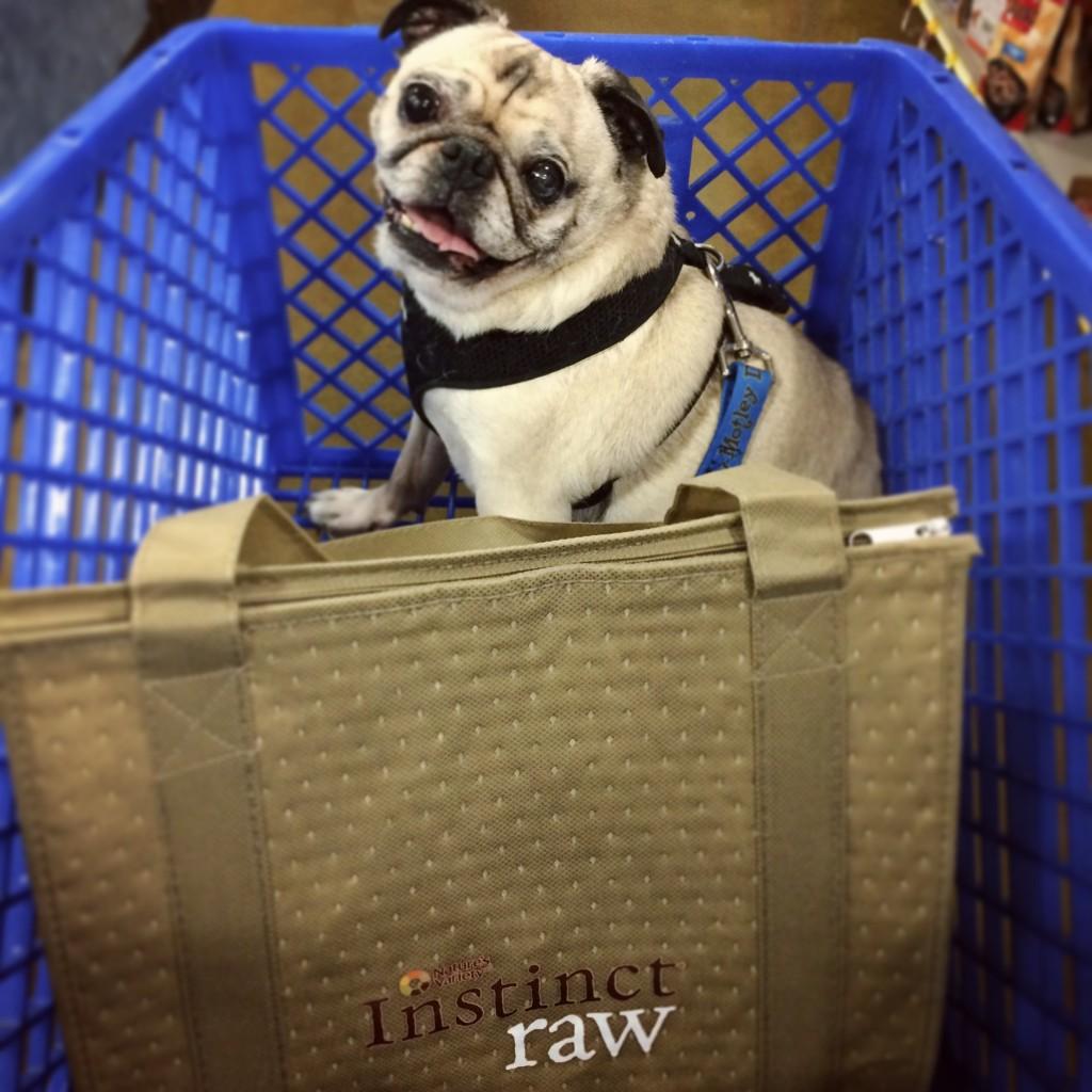Pug in a PetSmart Cart