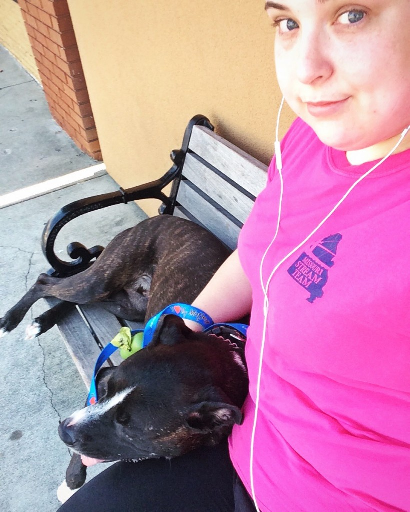Pit Bull on a Bench