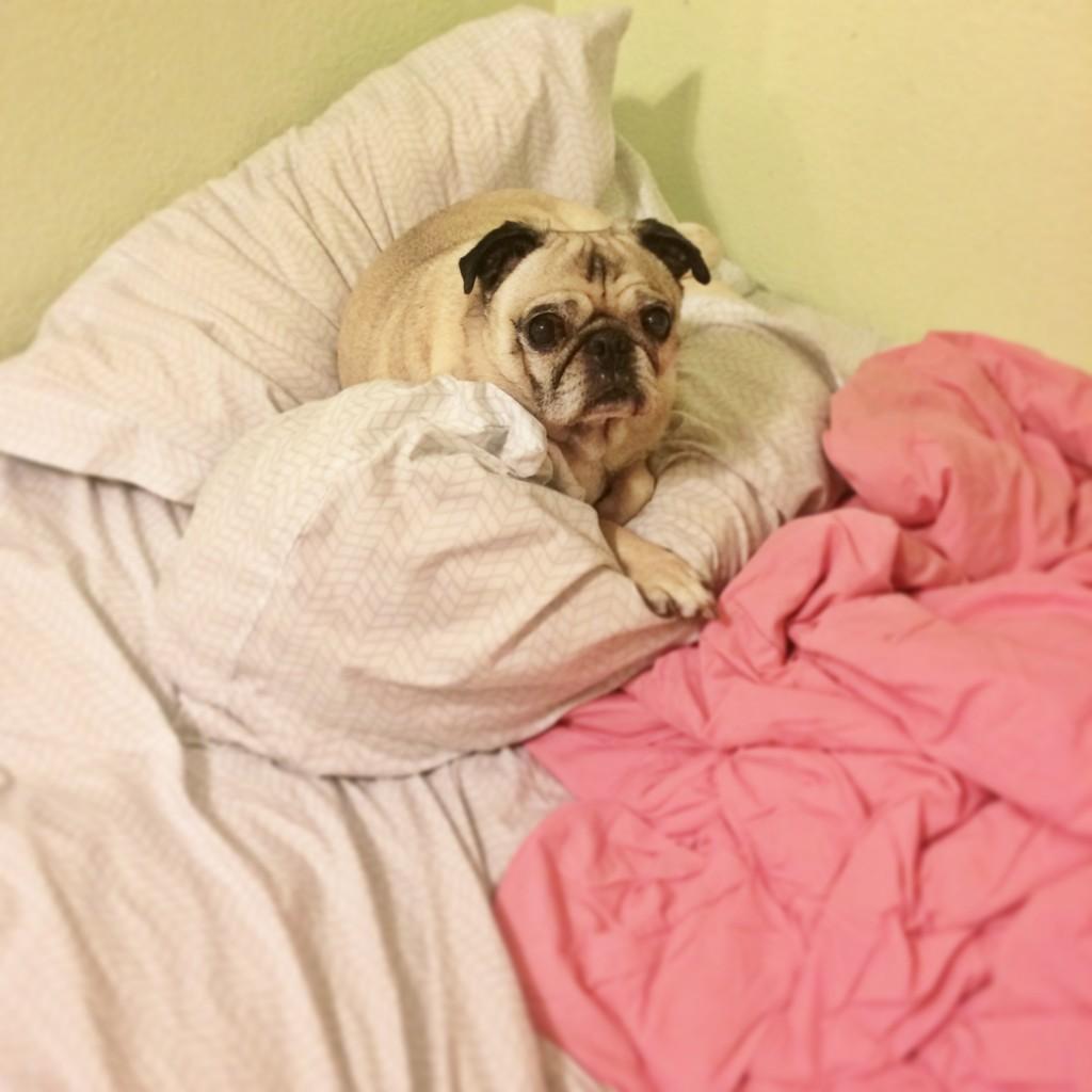 Pug Pillow Pile