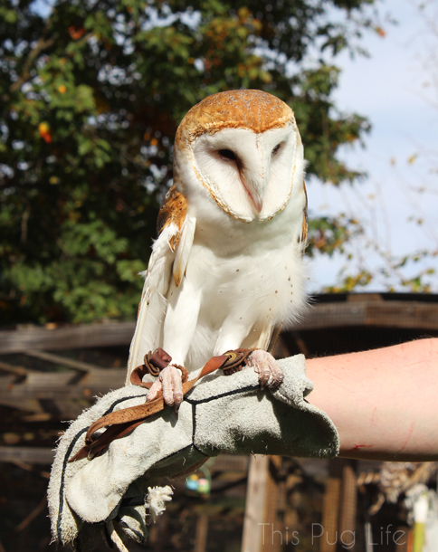 Barn Owl Treehouse Wildlife Center
