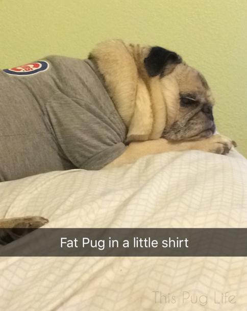 Fat Pug Little Shirt