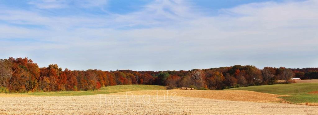 Southern Illinois Fall Foliage Panorama