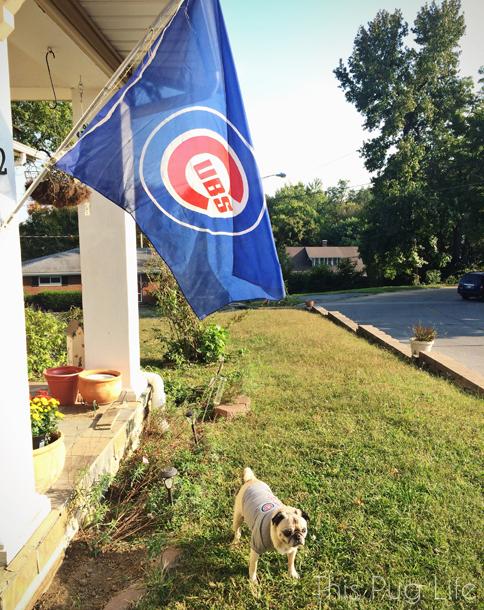 Pug Cubs Flag