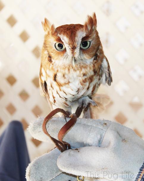 Pygmy Owl Treehouse Wildlife Center
