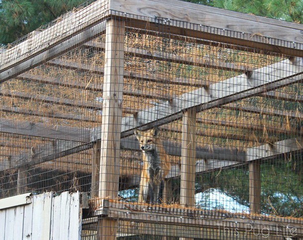 Red Fox Treehouse Wildlife Center