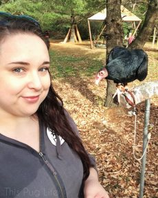 Turkey Vulture Selfie Treehouse Wildlife Center