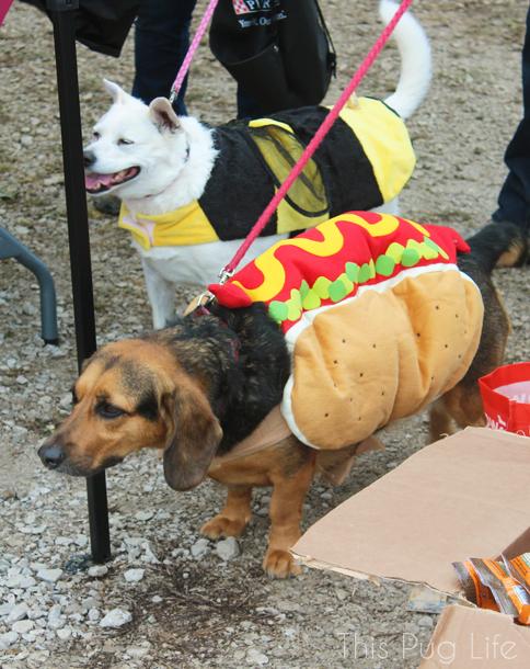 Howloween Festival Hot Dog