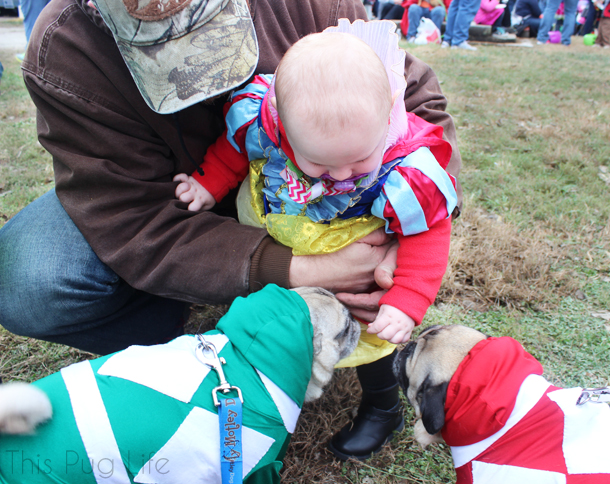 Howloween Festival Pugs and Baby