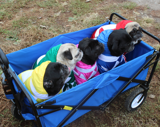 Mighty Morphin Power Ranger Pugs