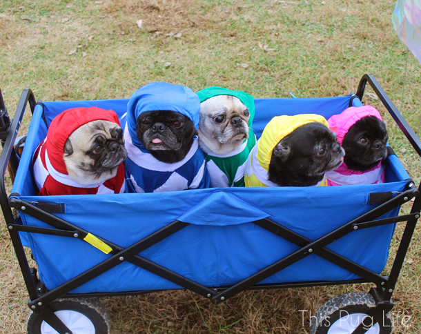 Mighty Morphin Pug Power Rangers
