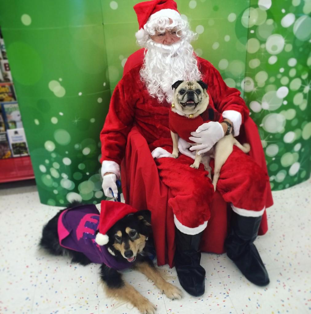 Pug and Molly visit Santa at Petco