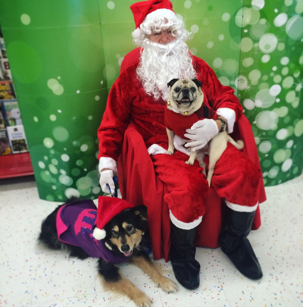 Pug and Molly visit Santa at Petco
