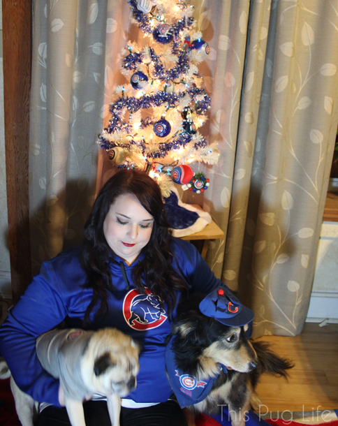 Cubs Christmas Portrait Outtake