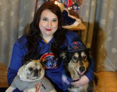 Cubs Christmas Portrait with dogs