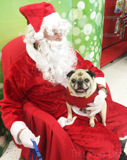 Pug Sitting on Santa's Lap
