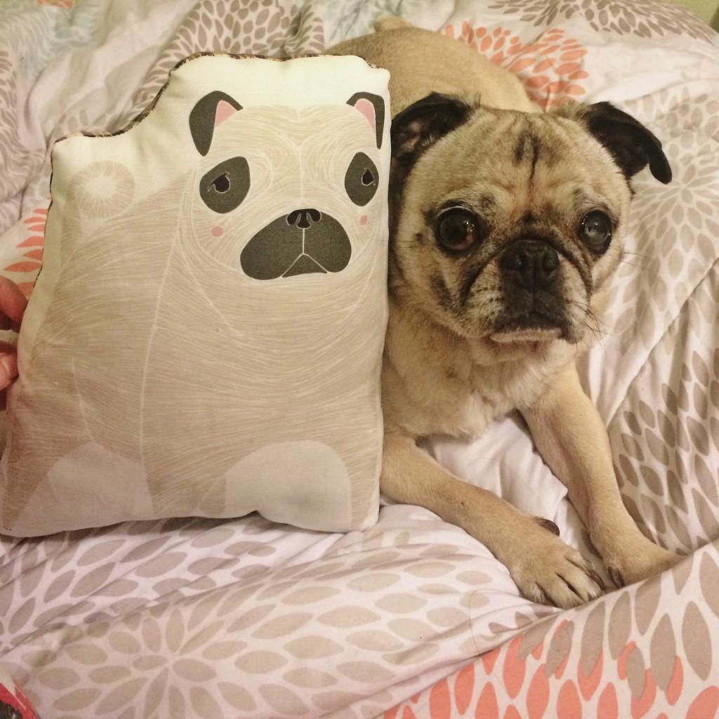 Pug and Pug Pillow