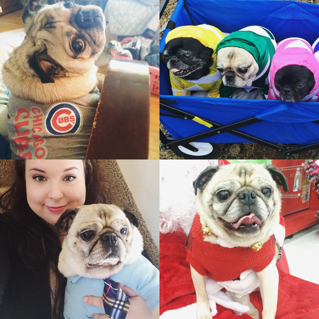 National Dress Up Your Pet Day Pug Collage