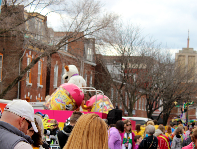 Beggin' Pet Parade 2016 St. Louis Soulard Mardi Gras