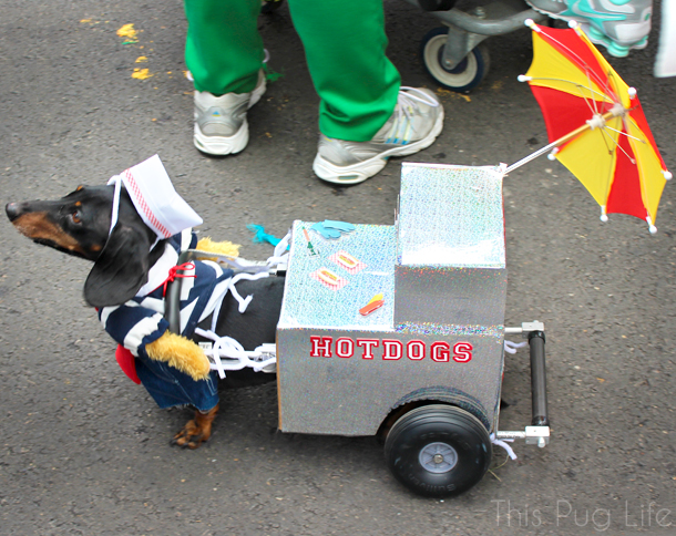 St. Louis Mardi Gras Beggin Pet Parade Daschund Hot Dog Cart