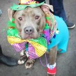 2016 Mardi Gras Beggin' Pet Parade (Part 2)